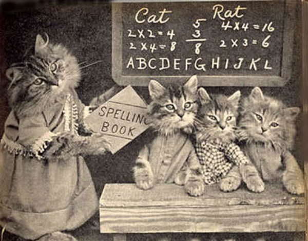 Antique Cats For Sale